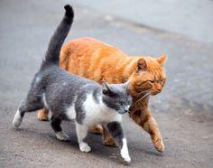 Takin' care of important cat bidness  ( by Dmitry Skvortsov )