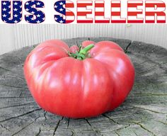 30 Organically Grown Brandywine Pink Tomato Seeds Heirloom Non GMO Beefsteak | eBay