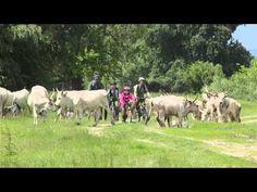 Duna-Dráva Nemzeti Park - YouTube National Parks, Youtube, Animals, Dune, Animales, Animaux, Animal, Animais, Youtubers