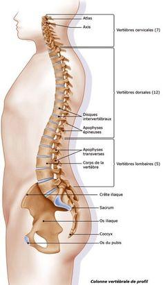 Vos problèmes de santé sont dans votre dos. Savez-vous que votre colonne vertébrale est un lieu majeur d'enregistrement de vos soucis ? Par exemple, les cervicalgies, torticolis et autres sont le résultat de conflits intérieurs sur des choix douloureux...