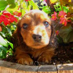 Weenie Dogs = LOVE
