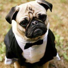 Bond Pug...