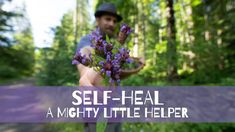 Self-Heal - a MIGHTY little helper - YouTube Self Healing, Healing Herbs, Natural Medicine, Herbal Medicine, Eatable Flowers, How To Make Oil, Herbal Magic, Herbs For Health
