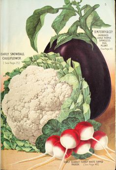 Ferry's 1909 Seed Annual, page Vegetable Illustration, Botanical Illustration, Vintage Prints, Vintage Posters, Vintage Seed Packets, Garden Labels, Seed Packaging, Vintage Gardening, Seed Catalogs