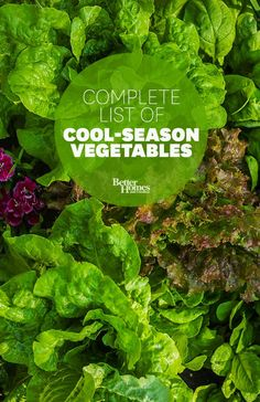 Extend your garden's harvest with these cool-season vegetables: http://www.bhg.com/gardening/vegetable/vegetables/cold-weather-vegetable-gardening/?socsrc=bhgpin013014coolseasonveggies