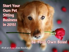 Start Your  Own Pet  Sitting  Business  in 2015! / Be Your Own Boss!