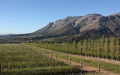 Waterford Estate Winery - our favorite!  Stellenbosch, South Africa