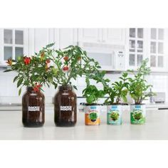 Back to the Roots Complete Herbs and Veggies Windowsill Grow Kit with Grow – The Home Depot - Modern Vegetable Planting Guide, Planting Vegetables, Veggies, Herb Garden Kit, Herb Garden In Kitchen, Home Depot, Tomato Planter, Tomato Garden, Growing Tomatoes In Containers