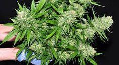 #Cannabis Medicinal : La Cámara de Diputados de Entre Ríos tratará el tema - Diario Junio: Diario Junio Cannabis Medicinal : La Cámara de…