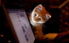 Kediniz sizi, bilgisayarınızdan, sevgilinizden veya başka bir evcil hayvanınızdan ölümüne kıskanabilir.