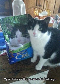 This must be the right cat food then....