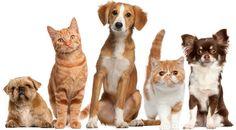 Numerologia para Animais