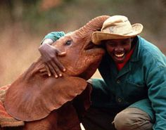 The threat to elephants from ivory poachers is greater than ever with an estimated 38,000 African elephants killed annually - a rate that left unchallenged would see elephants wiped out by 2025! Help save them from extinction by adopting your very own orphaned baby elephant for only $50 a year via www.DavidSheldrickWildlifetrust.com 5% of all palette proceeds will be donated to the DSWT charity and their efforts