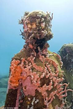happy to see this coral growth - Jason deCaires Taylor. Vicissitudes  Depth 5m, Grenada, West Indies.