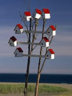 Photographic Print: Group of Birdhouses on a Small Tree Poster by Michael Melford : 16x12in