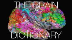 Scientists have created an interactive brain map showing which areas respond to different words. Nature Video explores how our brains organise the thousands of words in our heads.    This video was reproduced with permission and was first published on April 27, 2016. It is a Nature Video production.