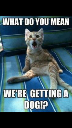 Funny Animal Pics With Quotes - Top 30 Funny Animal Memes And Quotes Funny Animal Quotes 25 Best Funny Animal Quotes And Funny Memes Quotes And Humor Funny Animal Quotes Cool Funny Q. Funny Animal Jokes, Funny Cat Memes, Dog Memes, Cute Funny Animals, Funny Animal Pictures, Cute Baby Animals, Funny Dogs, Funniest Animals, Funny Humor