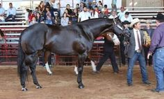 Darkelly, blk, h, 94, 24-4-(1)-9-2 $89,200 SI-110 First Down Kelly X Shawnee Kate X Shawnee Bug, 1996 Blue Ribbon Fut., Race Sire & Sire of Barrel Racing progeny earning over $1 million, Sire of NFR Qualifiers Kellies Chick, CP Dark Moon.