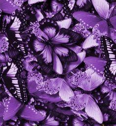 Purple butterfies!