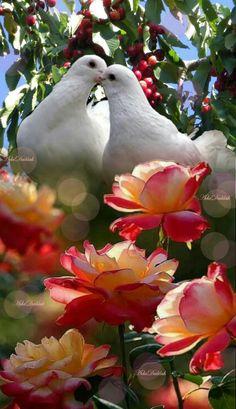Wallpaper Nature Flowers, Beautiful Landscape Wallpaper, Beautiful Landscapes, Beautiful Rose Flowers, Beautiful Birds, Animals Beautiful, Scenery Pictures, Bird Pictures, Pretty Birds