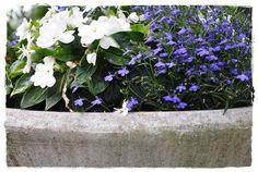 Blog over tuinieren, handwerken, rozen en vintage