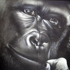 Découvrez en profondeur les tenants et les aboutissants du Darwin Foundation et son fonds de dotation moteur de l'écosystème. // Darwin Foundation, Darwin, Animals, Engine, Animales, Animaux, Animal, Foundation Series, Animais