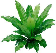 Tree Photoshop, Landscape Sketch, Garden Architecture, Landscaping Plants, Graphic Design Illustration, Horticulture, Shrubs, Plant Leaves, Flowers