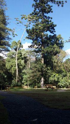 Jardim Parque Municipal Petrópolis