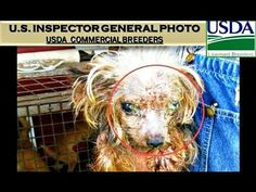 U.S.INSPECTOR GENERAL Gives Itself *FAIL*- PET STORE PUPPY BREEDERS- FED...