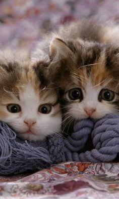 mali slatki macici - Buscar con Google
