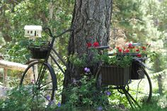 This OLD bike decked out with flower baskets is in my cousin's delightful garden! Thanks, Terry