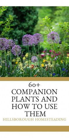 Intimidated by Companion Planting Dont be Learn how to pair your vegetables herbs and flowers in the ultimate garden layout to make a selfsufficient permaculture garden t. Organic Gardening Tips, Organic Plants, Organic Vegetables, Herb Garden Design, Garden Types, Box Garden, Garden Pool, Garden Art, Garden Landscaping