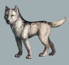"The Newfoundland Wolf was not formally described until after its extinction. Appropriately, its scientific name means ""Beothuk Wolf""—after the Native American inhabitants of Newfoundland (the Beothuk) who are likewise extinct."