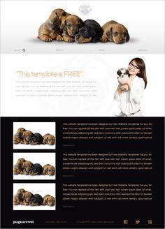 15 Best Free Animal