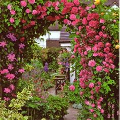 archway of roses