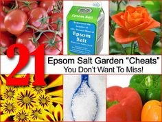 """21 Epsom Salt Garden """"Cheats"""" You Don't Want To Miss! Makes plants that need magnesium like pale leaved tomatoes or citrus .. turn bright green again!"""