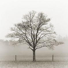 Winter Tree, Cades Cove 2012