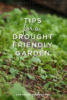 14 gardening tips everyone can use in a drought to make their garden to save water.