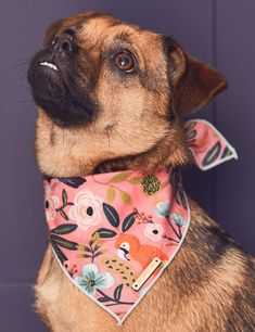 female dog accessories pet supplies ALOHA DOG BANDANA BY THE FOGGY DOG - Our favourite luxury dog accessories of 2018 - featuring all the hottest pet trends were loving right now, female owned brands, and fair trade products. Dog Training Methods, Basic Dog Training, Dog Training Techniques, Training Dogs, Puppy Obedience Training, Positive Dog Training, Easiest Dogs To Train, Dog List, Needle Felted