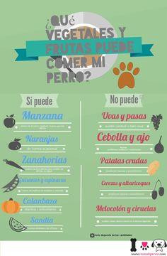 Vegetales y frutas que puede comer tu perro http://www.razasdeperros.com/que-vegetales-y-frutas-puede-comer-mi-perro-2/