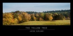 A pretty little yellow tree spottet in the autumn morning. https://plus.google.com/+JacobSurland/posts/Az3sQeAs3E8