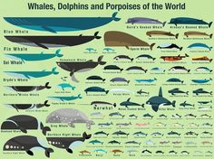 Whales, Dolphins and Porpoises of the World - Paul Daviz  ‪#‎oopsydaisymakeover‬