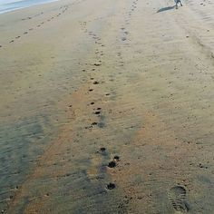Hoy nos levantamos con ganas de correr!!!!🐶🌊⚽☉#terry #westhighlandterrier #westy #salinas #paseoperruno #playadesalinas #montereylocals #salinaslocals- posted by jorge https://www.instagram.com/purkyto - See more of Salinas, CA at http://salinaslocals.com