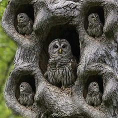 Owl family. Art. Photography.