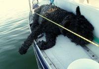 Sailing dog taking his job seriously - rail meat!