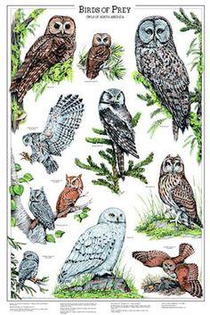 Birds of Prey - want this print! #owls #psychopomp