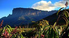 Tepui - Wikipedia, den frie encyklopædi