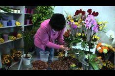 Jak se starat o orchideje