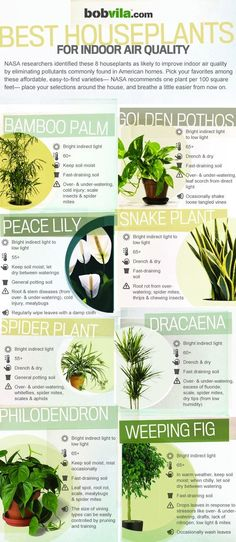 BEST HOUSE PLANTS FOR INDOOR AIR QUALITY...