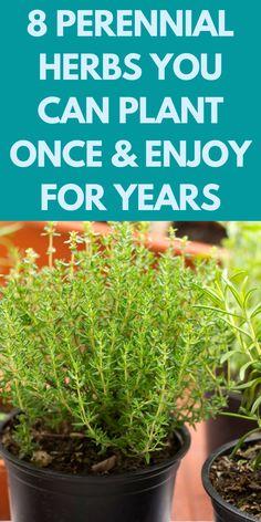 Garden Ideas To Make, Diy Garden Projects, Garden Tools, Herbs Garden, Garden Fun, Indoor Garden, Growing Herbs, Growing Vegetables, Fast Growing